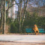A Tricky Dance on a Slippery Slope | Episode 20
